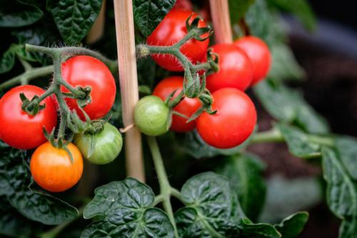 agrosystemy.pl-produkty-produkcja-roslinna-zastosowanie-technologii-multikraft-em-w-uprawie-warzyw