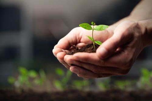 produkcja roślin
