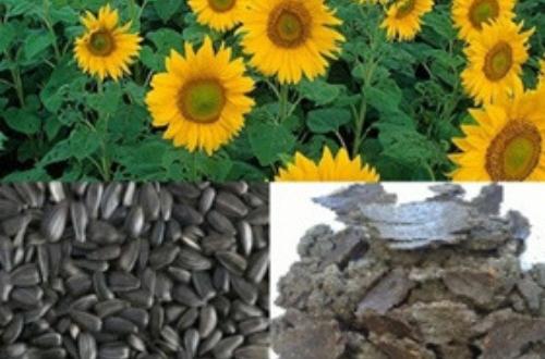 SunflowerMeal-02